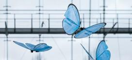 Drones mariposas
