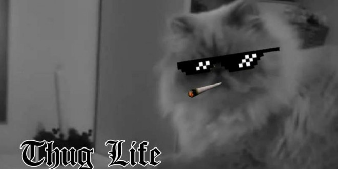 https://www.profesionalreview.com/wp-content/uploads/2016/01/thug-life-significado-660x330.jpg