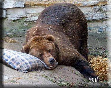 hibernar-pc