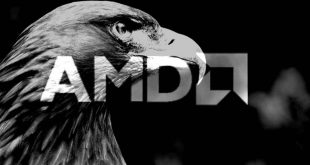 amd-gray-hawk