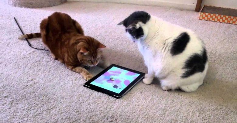 Juegos Android para tu gato